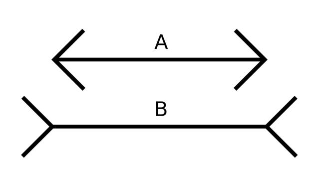 Trocche100/Wikimedia Commons