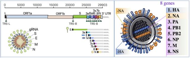 BioRxiv (Domgwan Kim, et al); NIAID (Public Domain)