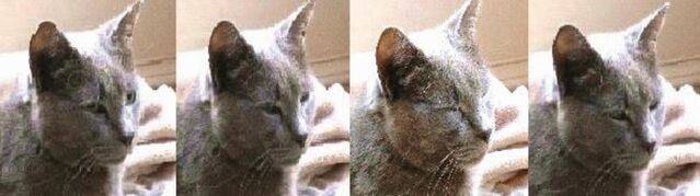 The role of cat eye narrowing movements in cat–human communication, open access.