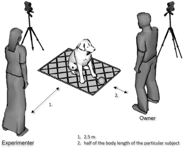 """""""Dogs (Canis familiaris) recognize their own body as a physical obstacle.""""/Open access"""