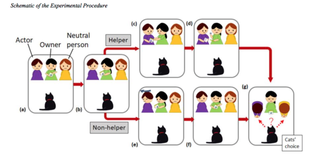 """""""Cats (Felis catus) Show no Avoidance of People who Behave Negatively to their Owner"""", open access."""