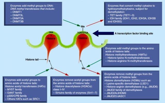 Epigenomics (2015) 7(3), 427–449