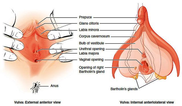hubby-clitoris-picture-womens-masturbation-secrets-redhead