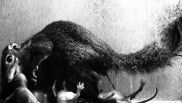 Photograph taken by Dietrich von Holst in 1967.