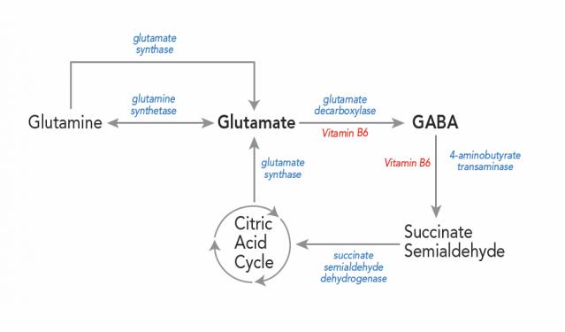 The Neuroendoimmune Connection
