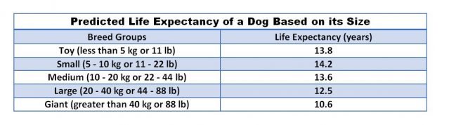 How Long Will Your Dog Live? | Psychology Today