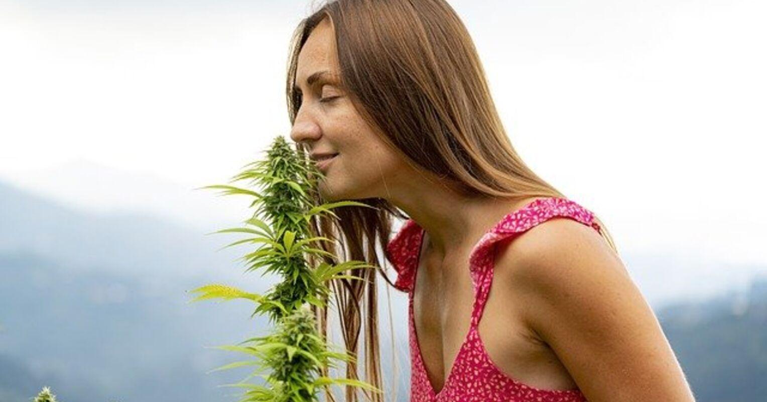 Can Marijuana Cause Psychosis?