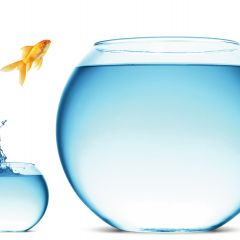 Image: Goldfish jumping from small fishbowl to larger