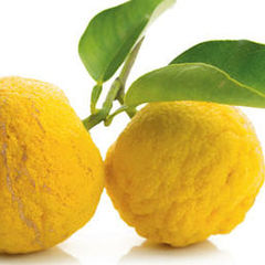 Keen Cuisine: Fruit of the Future