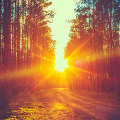 Seeing the Light on Vitamin D