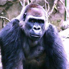 14. Zoo Humans