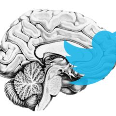 The Neuroanatomy of a Retweet