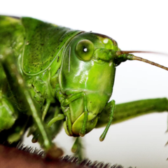 Can Pet Crickets Improve the Well-being of the Elderly?