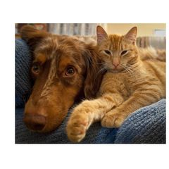 Do Dogs and Cats Have the Same Emotional Responses?