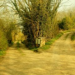 Yearning for the Romantic Road Not Taken