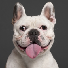 How Social Contagion Helps Explain Our Pet Choices