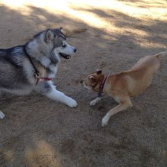 The Power of Play: Dogs Just Want to Have Fun