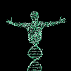 Genetic Research Uncovers Traits Associated With Longer Life