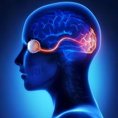 Low-Intensity Aerobic Exercise Has Surprising Brain Benefits