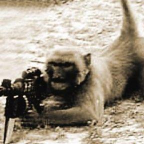 The Dark Side of Creativity: Uses of Animals in Warfare