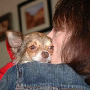 Expert: Humane Treatment Long Overdue for Puppy Mill Dogs