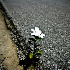Resilience in the Face of Rough Times
