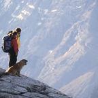 http://pixabay.com/en/walking-the-dog-dog-sunset-dogs-273526/