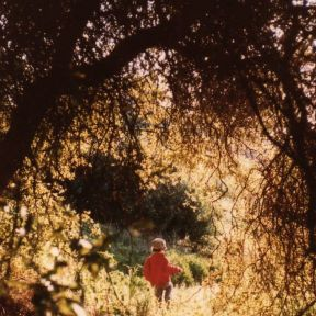 Do Early Outdoor Experiences Help Build Healthier Brains?