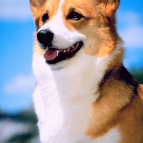 The Queen's Corgis and Other Breeds at Risk of Extinction