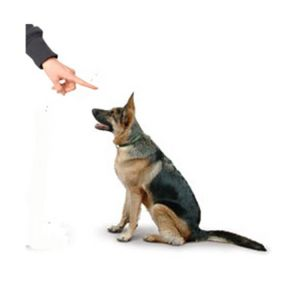The Effect of Training Method on Stress Levels in Dogs