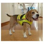 Infection Detection Dogs