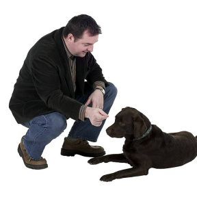 Self-Control in Dogs Is a Limited Resource