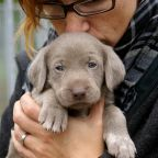 Do Puppy Personality Tests Predict Adult Dog Behaviors?