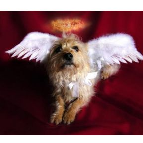 Pope Francis Says That All Dogs Go to Heaven