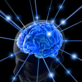 In Defense of Brain Porn