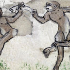 Why Humans Can, But Apes and Monkeys Can't Sync to the Beat