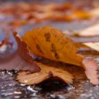 Seasonal Mindfulness:  6 Tips to Experience the Changing Weather