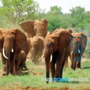 """Elephant abuse in film: """"Water for Elephant"""" star, Tai, shocked with electric prod"""
