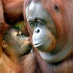 Green: Environmental Devastation and the Last Hours of an Orangutan's Life