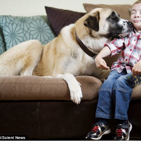 Lean On Me: A Boy In Need and A Three-Legged Dog