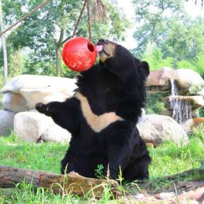 Jasper's Story: Saving Moon Bears Offers Lessons in Hope