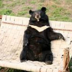 The Bear Bile Industry: Cruelty Can't Stand the Spotlight