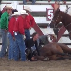 Horse Shocked and Dies at New Jersey Rodeo: Time to Ban Them