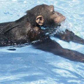 Apes Swim and Birds Know Speed Limits