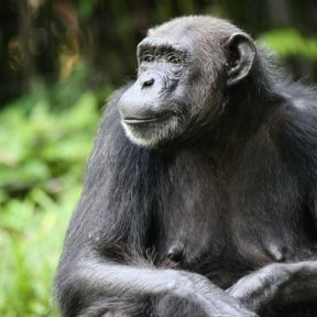 The Politics of Species: Reshaping Relations With Animals