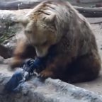 Bear Saves Drowning Crow at the Budapest Zoo: A Moral Act?
