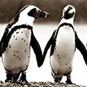 Jackass Penguins Get Pissed Off, Lonely, and Love to Party