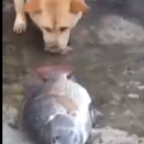 Is This Dog Really Trying to Save the Fish Out of Water?