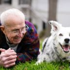 Does Your Dog Really Love You? Canine Cognition and Emotions
