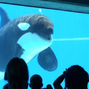 SeaWorld Exposed: Behavioral Profiles of Captive Orcas